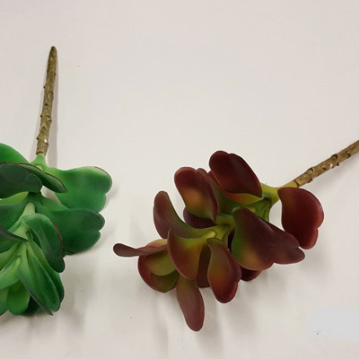 Succulent 1875 Red or Green