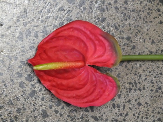 #artificialflowers #fakeflowers #decorflowers #fauxflowers#tropical