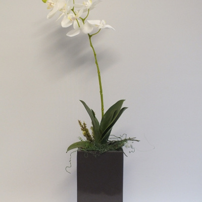 Phalenopsis in a grey tall square container 2098