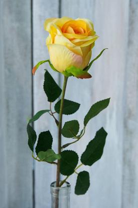 Rose bud Sophia Yellow 1973