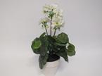 #artificialflowers#fakeflowers#decorflowers#fauxflowers#silkflowers#geranium#whi