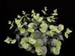 #artificialflowers#fakeflowers#decorflowers#fauxflowers#silkflowers#eucalyptus