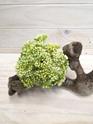 Seed Posy white green 4262