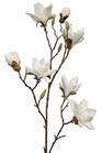 Magnolia Branch Spring Stem 4532