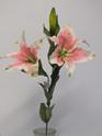 Lily Oriental Stem Pink 4512