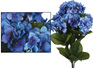 Hydrangea Bush Blue 4494
