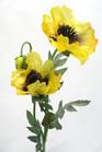 Poppy Yellow 4527
