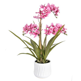 Orchid in container 4480
