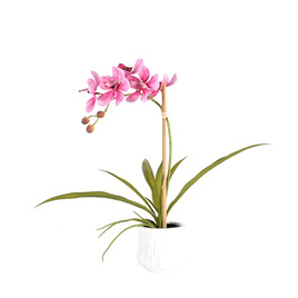 Orchid in container 4481