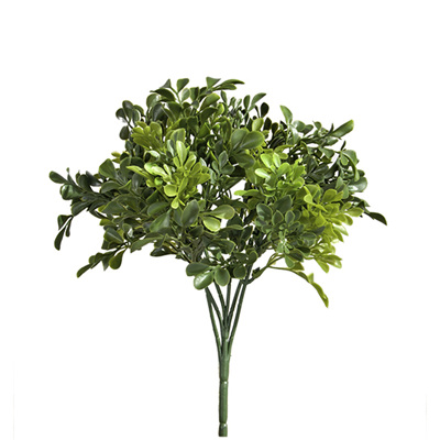 Boxwood Bush 4034