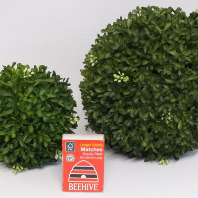 Boxwood Ball  1485 -6