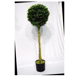 Topiary Boxwood standard 1002