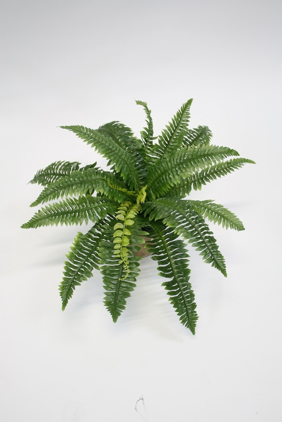 #artificialflowers#fakeflowers#decorflowers#fauxflowers#silkflowers#bostonfern