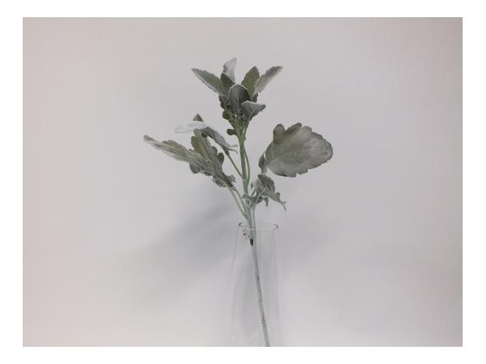#artificialflowers#fakeflowers#decorflowers#fauxflowers#silk#dustymiller#grey