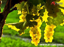 Arvipo electric pruning and trimming shears