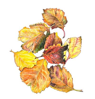 Autumn apple leaves (large)