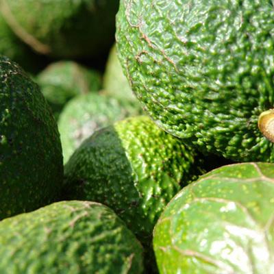 Avocado Certified Organic Hass