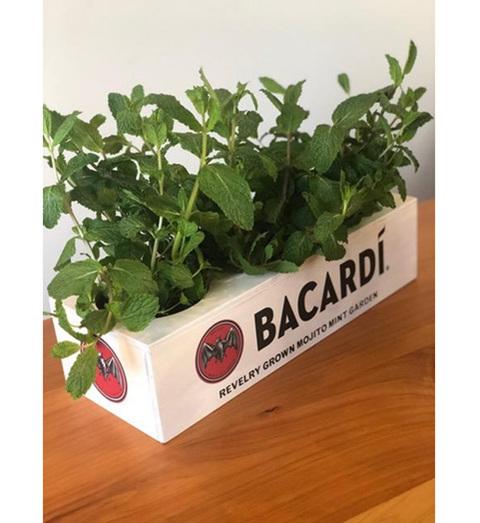 bacardi activation promotion