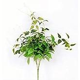 Bamboo Grass bush 4289