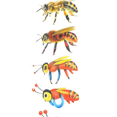 Beevolution - Framed A4 Print