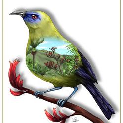 Bellbird Birds Eye View - A4 Print