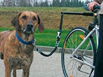 Bike Attachment For Your Dog #2