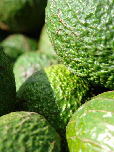 Biogro Certified Avocados HASS -  S, M, (1)