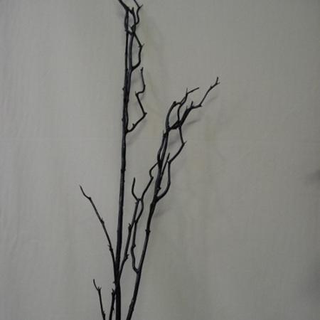 Birch twig  black 1054