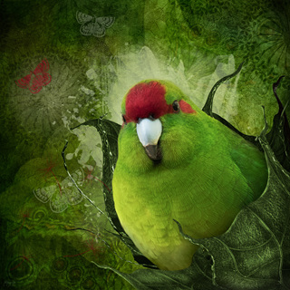 Bird Art by Judi Lapsley Miller