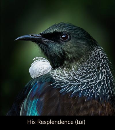 Bird Art by Judi Lapsley Miller