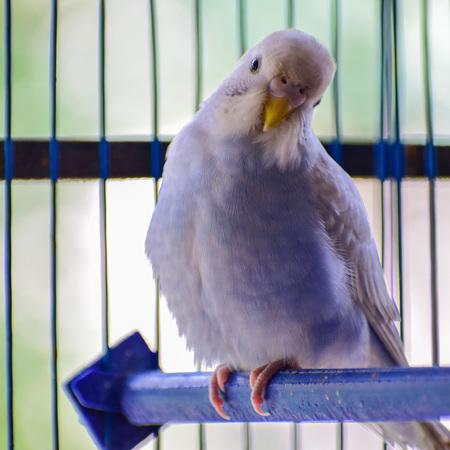 Bird Housing & Accessories