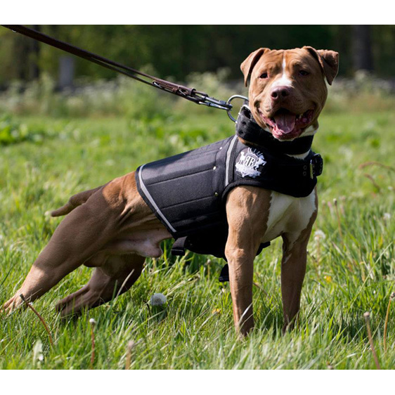 Black Canine Weight Vest by Rogue Royalty
