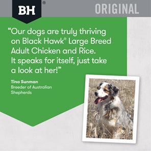 Black Hawk Large Breed Chicken & Rice 20kg