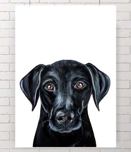 black Labrador original
