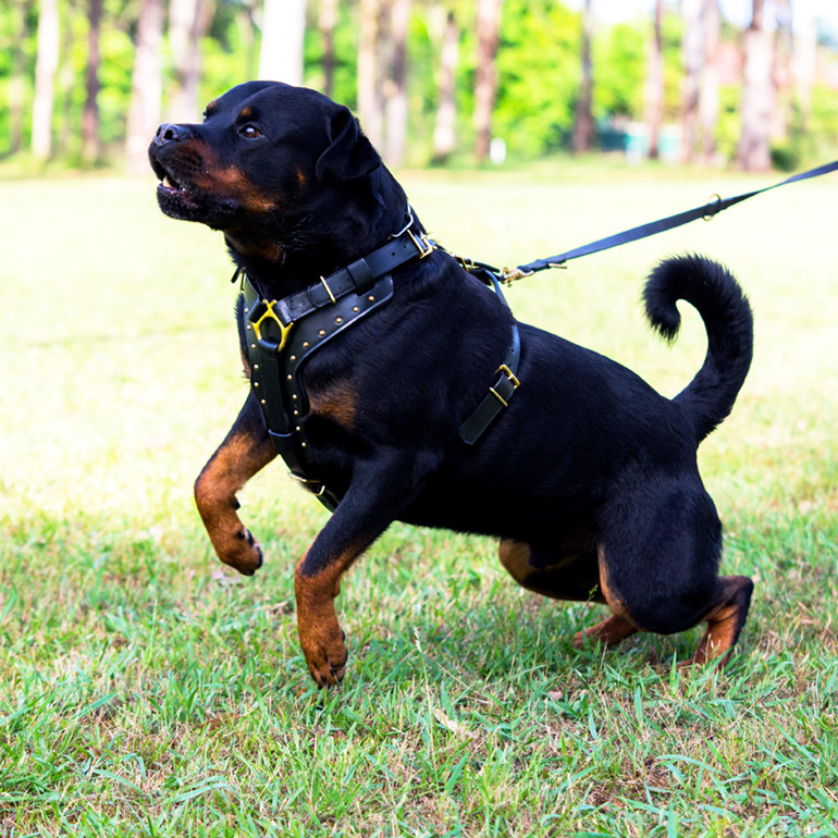 Black leather and brass dog harness for large dogs by Rogue Royalty