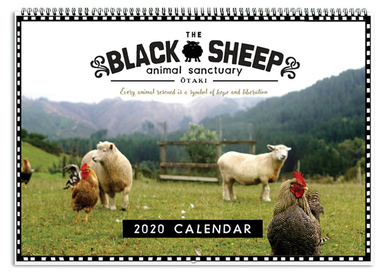 Black Sheep Sanctuary Calendar