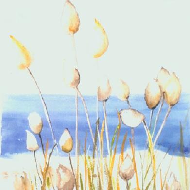 Blank Greeting Card - Beach Grass