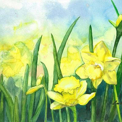 Blank Greeting Card - Daffodils