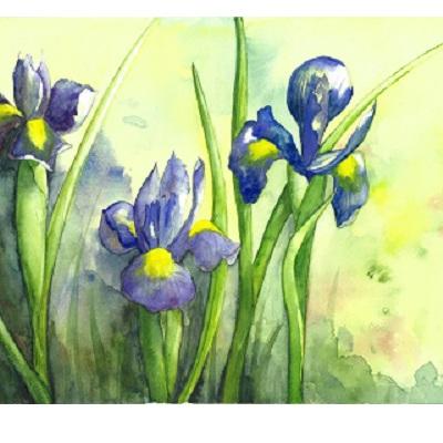 Blank Greeting Card - Dutch Iris