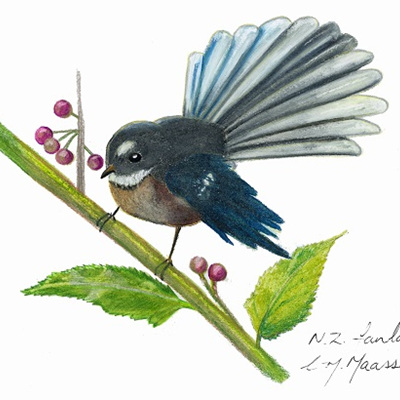 Blank Greeting Card - Fantail