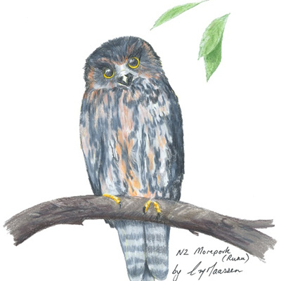 Blank Greeting Card - Morepork