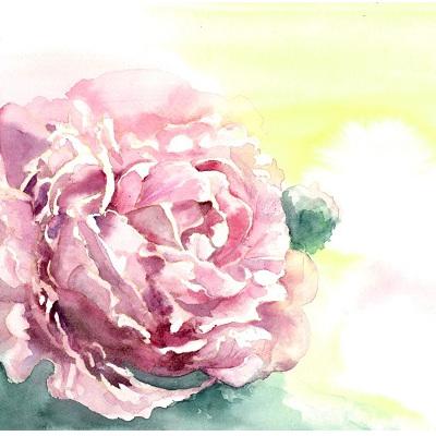 Blank Greeting Card - Pink Peony