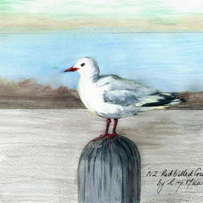 Blank Greeting Card - Red-Billed Gull