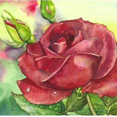 Blank Greeting Card - Red Rose