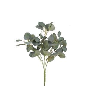 Blue Gum bush 4563