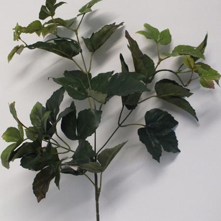 Boston Ivy spray Green 1951