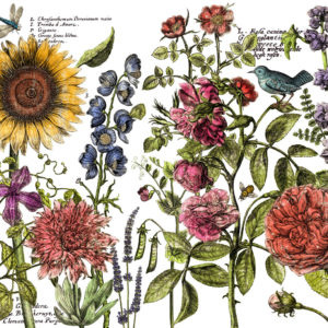 Iron Orchid Design Decor Transfer 'Botanist Journal'