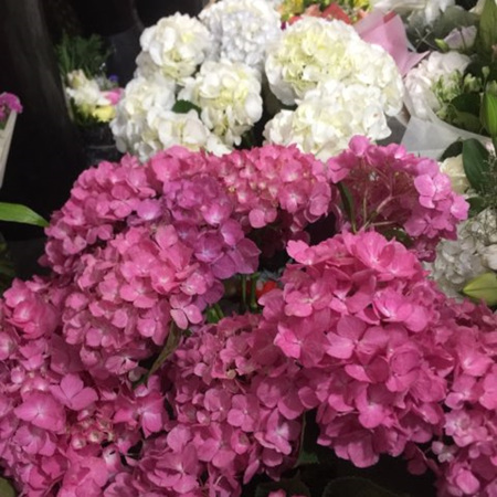 Bouquets and posies- Hydrangea included