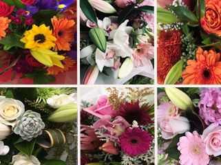 Bouquets & Posies