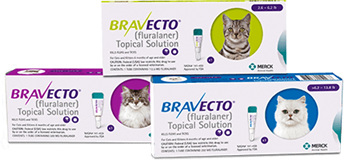 Bravecto 3 Month Spot-On Flea and Tick Protection for Cats